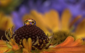 Picture flower, water, macro, nature, drop