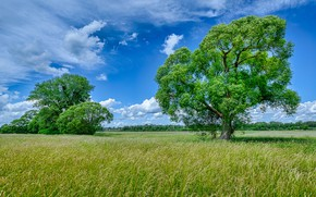Picture greens, field, summer, the sky, grass, clouds, trees, blue, foliage, dal, spikelets, meadow, green, the …