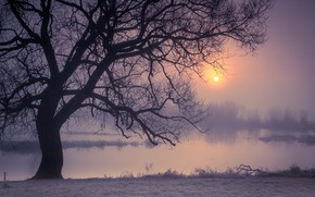 Picture night, fog, river, tree