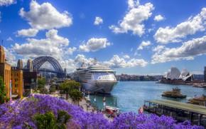 Picture water, flowers, Australia, Sydney, liner