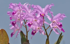 Picture photo, Flowers, Purple, Orchids