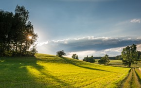 Picture greens, field, the sun, light, trees, morning