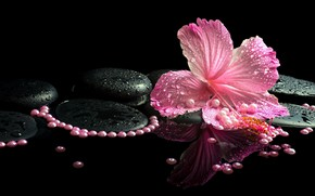 Picture beads, black background, hibiscus, Spa stones