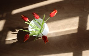 Picture light, glass, strip, Board, bouquet, flooring, tulips, floor, red, shadows, vase, buds
