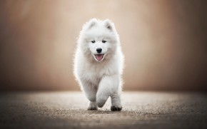 Picture road, language, white, look, light, pose, background, dog, baby, running, puppy, walk, face, blurred, adorable, …