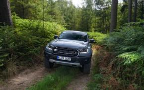 Picture grey, Ford, Raptor, pickup, Ranger, forest road, 2019