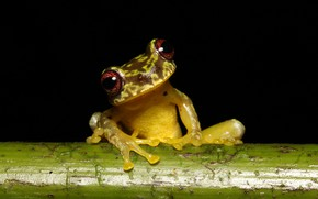 Picture look, macro, frog, stem, black background, spotted