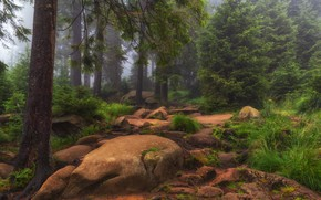 Picture forest, grass, trees, nature, fog, stones