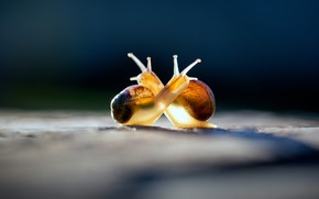Wallpaper macro, light, love, blue, yellow, pose, the dark background, romance, two, cute, snail, snails, friendship, ...