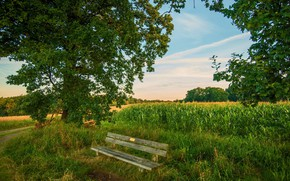 Picture greens, landscape, bench, nature, beauty