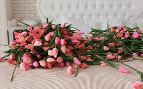 Picture tulips, pink, buds, a lot