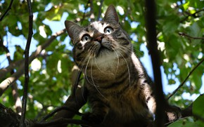 Picture cat, cat, face, leaves, light, branches, tree