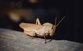 Picture nature, background, insect