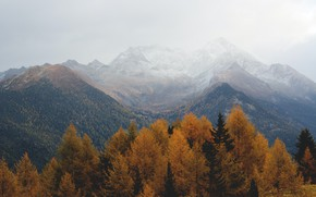 Picture autumn, forest, the sky, trees, mountains, nature, overcast, rocks, haze