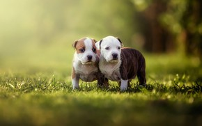 Wallpaper greens, dogs, summer, grass, look, light, nature, pose, green, glare, Park, background, mood, together, glade, ...