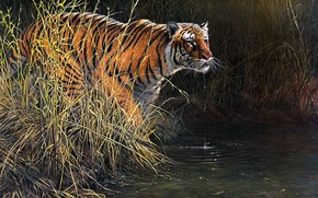 Picture grass, look, drops, nature, tiger, pose, river, thickets, shore, figure, picture, art, painting, drink, the …