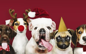 Picture dog, New Year, Christmas, puppy, happy, Santa, Christmas, puppy, dog, New Year, cute, Merry, santa …