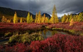 Picture autumn, nature, Trees, Kolyma, stream Unknown, Maxim Evdokimov