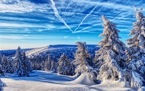 Picture winter, forest, the sky, snow, ate, Czech Republic, Czech Republic, Jeseníky Mountains, Mountains Jeseníky