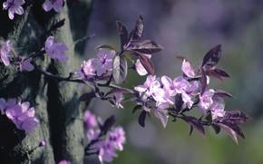 Picture macro, nature, tree, branch, flowering, flowers, drain
