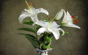 Picture flowers, vase, white lilies