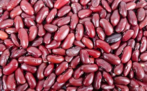 Picture beans, cereals, agriculture