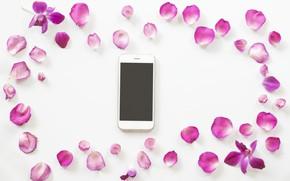 Picture petals, Phone, smartphone
