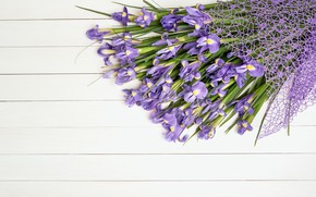 Picture white, flowers, background, bouquet, iris