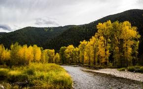 Picture autumn, trees, mountains, river, Montana, USA