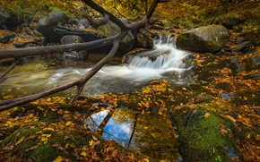 Picture autumn, forest, trees, branches, reflection, stones, foliage, waterfall, snag