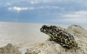 Picture sea, sunset, Toad