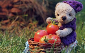 Picture summer, grass, leaves, light, mood, toy, garden, harvest, bear, muzzle, bear, costume, bear, basket, tomatoes, ...