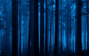 Picture forest, trees, night, nature, fog, dark