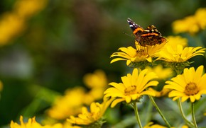 Picture summer, macro, flowers, butterfly, yellow