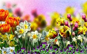 Picture Tulipany, Flowers, Bratki