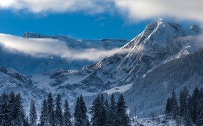 Picture winter, forest, the sky, clouds, snow, trees, mountains, nature, rocks, Switzerland