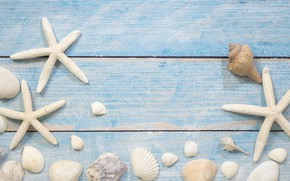 Picture sea, background, shell, starfish