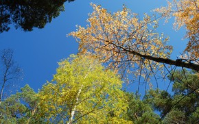 Picture autumn, the sky, trees