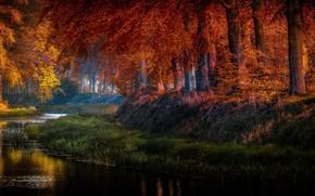 Picture autumn, grass, trees, nature, pond, Park, pond, Holland, Jan-Herman Visser