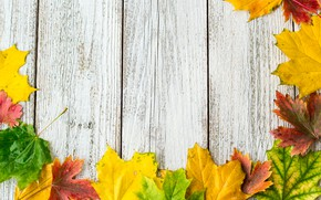 Picture autumn, leaves, background, colorful, rainbow, maple, wood, autumn, leaves, maple