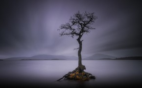 Picture mountains, lake, tree