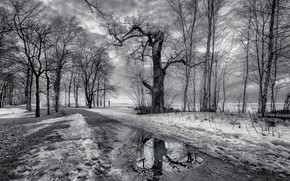Picture snow, trees, puddle