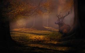 Picture forest, the dark background, tree, deer, haze, photoart