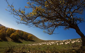Picture tree, hills, sheep, flock