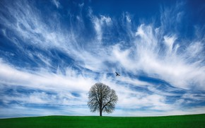 Picture field, clouds, photo, tree, bird
