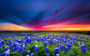 Picture field, summer, the sky, clouds, sunset, flowers, glade, meadow, blue, lupins