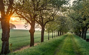 Picture road, greens, field, grass, trees, fog, dawn, morning, Germany, alley, flowering, Saxony, Laucha