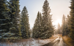 Picture road, forest, trees, ate, tree