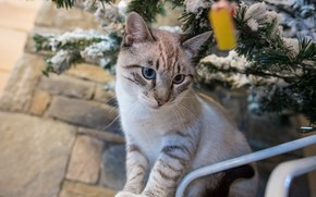 Picture pose, kitty, tree, blue eyes