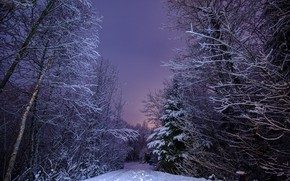 Picture winter, road, forest, snow, landscape, nature, the evening